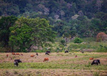 Wisata Horor Banyuwangi